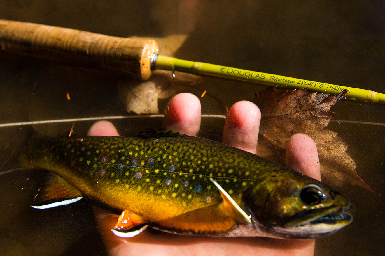 Douglas Outdoors Fly Rods Upstream Gallery 02