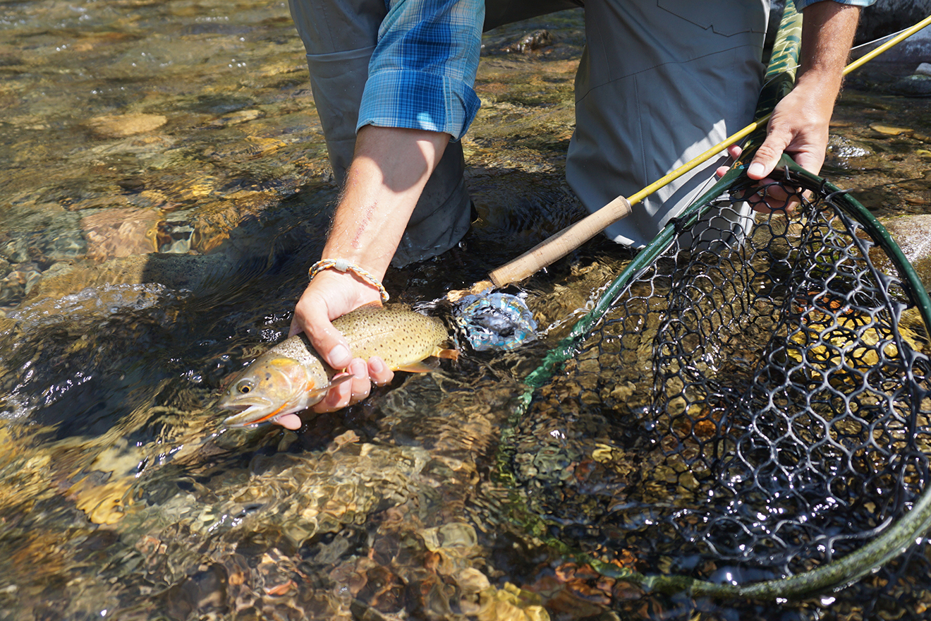 Douglas Outdoors Fly Rods Upstream Plus Gallery 01
